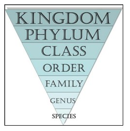 Figure 2. Classification of animals. Kingdom is the broadest category. For example, plants and animals are separate kingdoms.